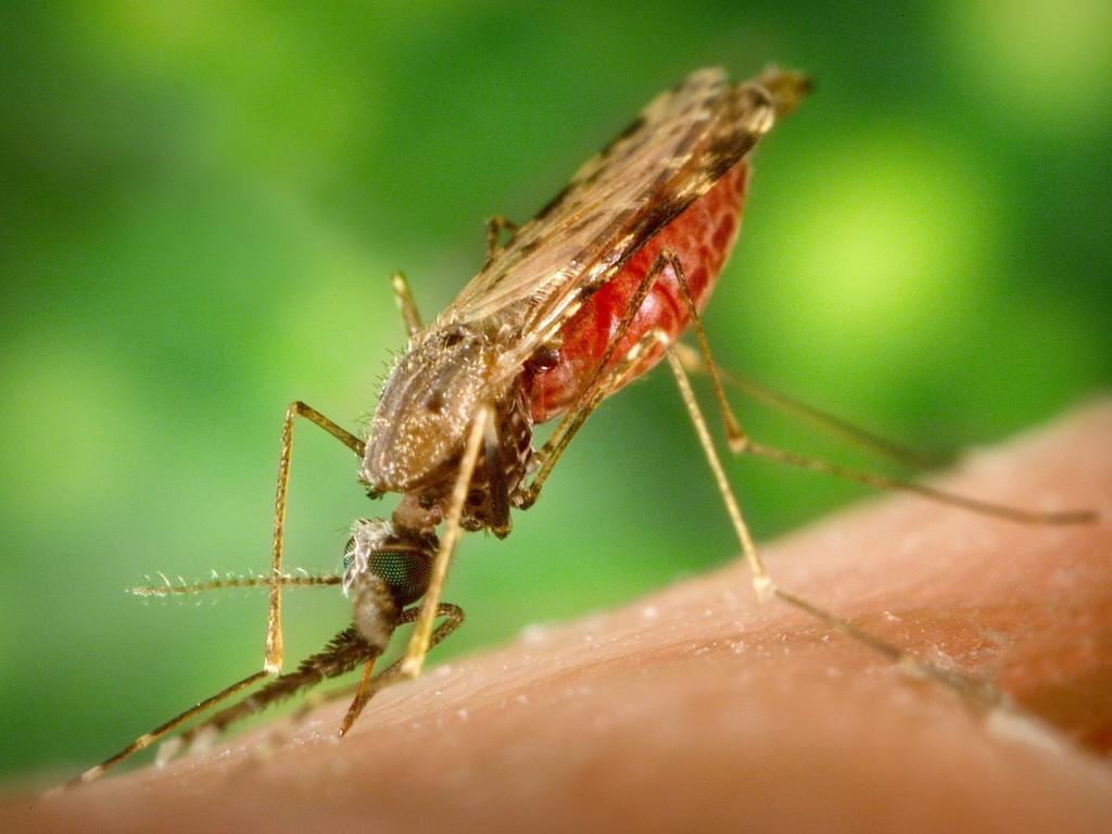 malaria-title