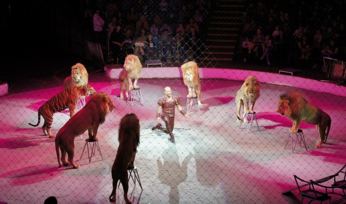 Нубийские львы