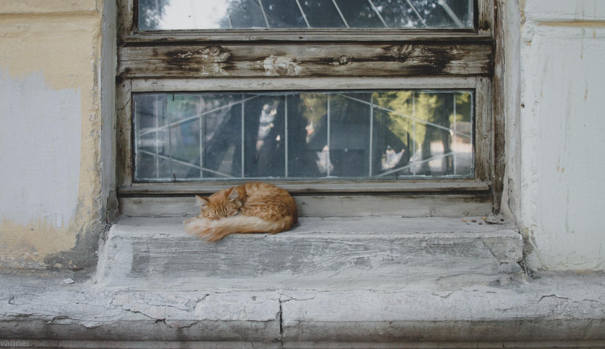 Кот из Негритянского поселка