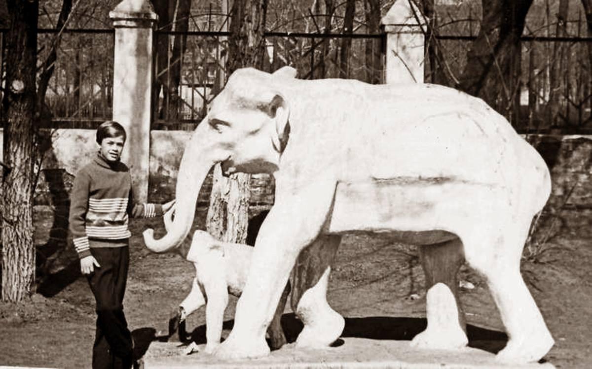 Слоны в парке Щорса