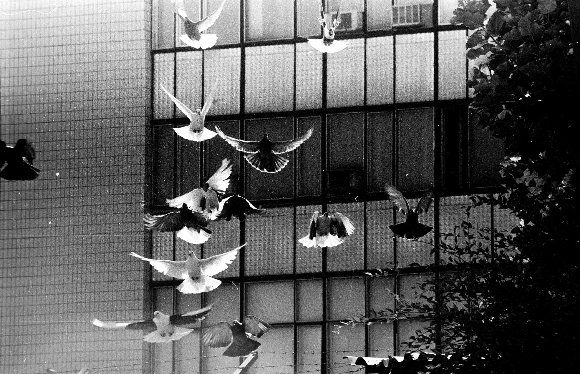 1880_birds