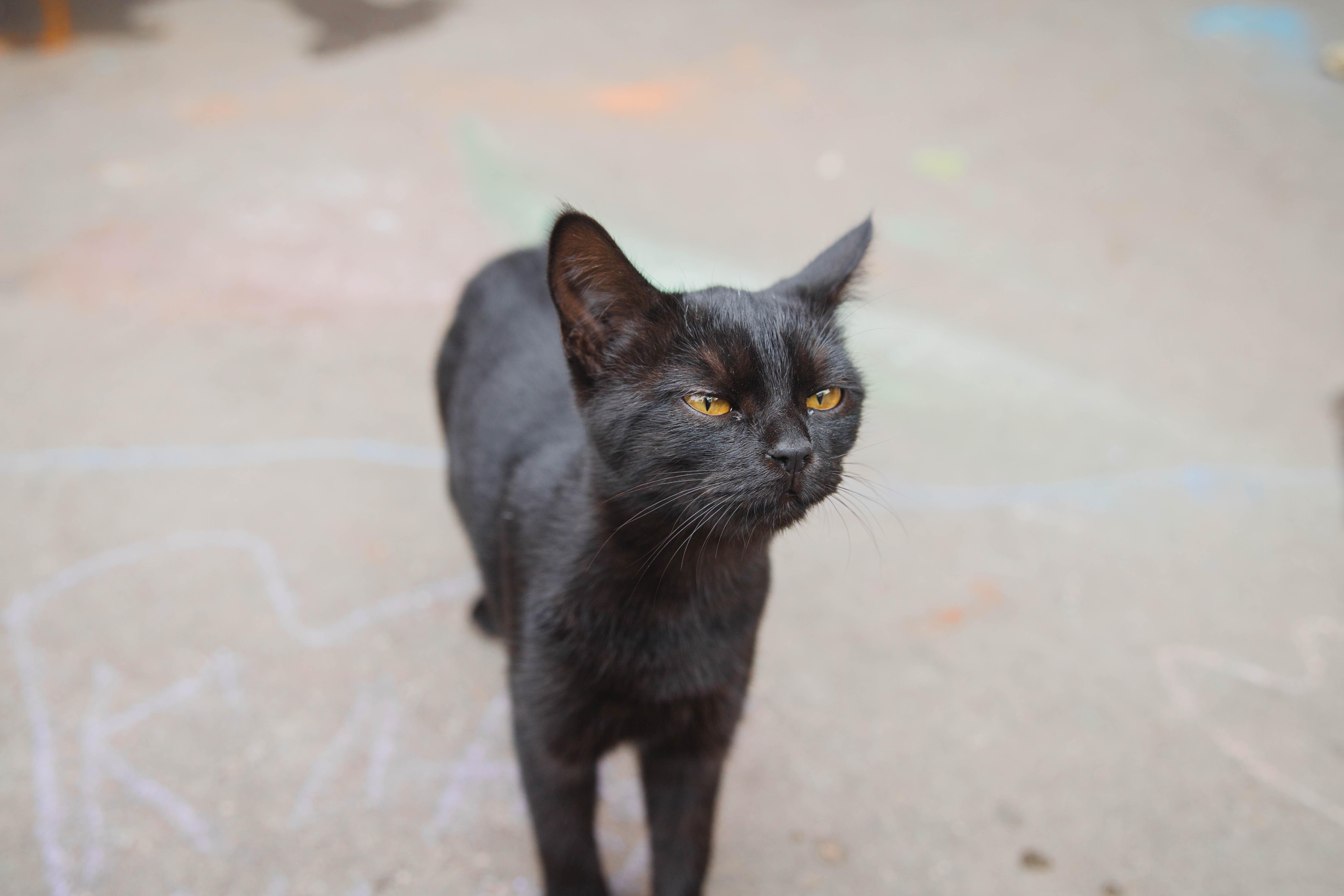 Котик с улицы Садовой