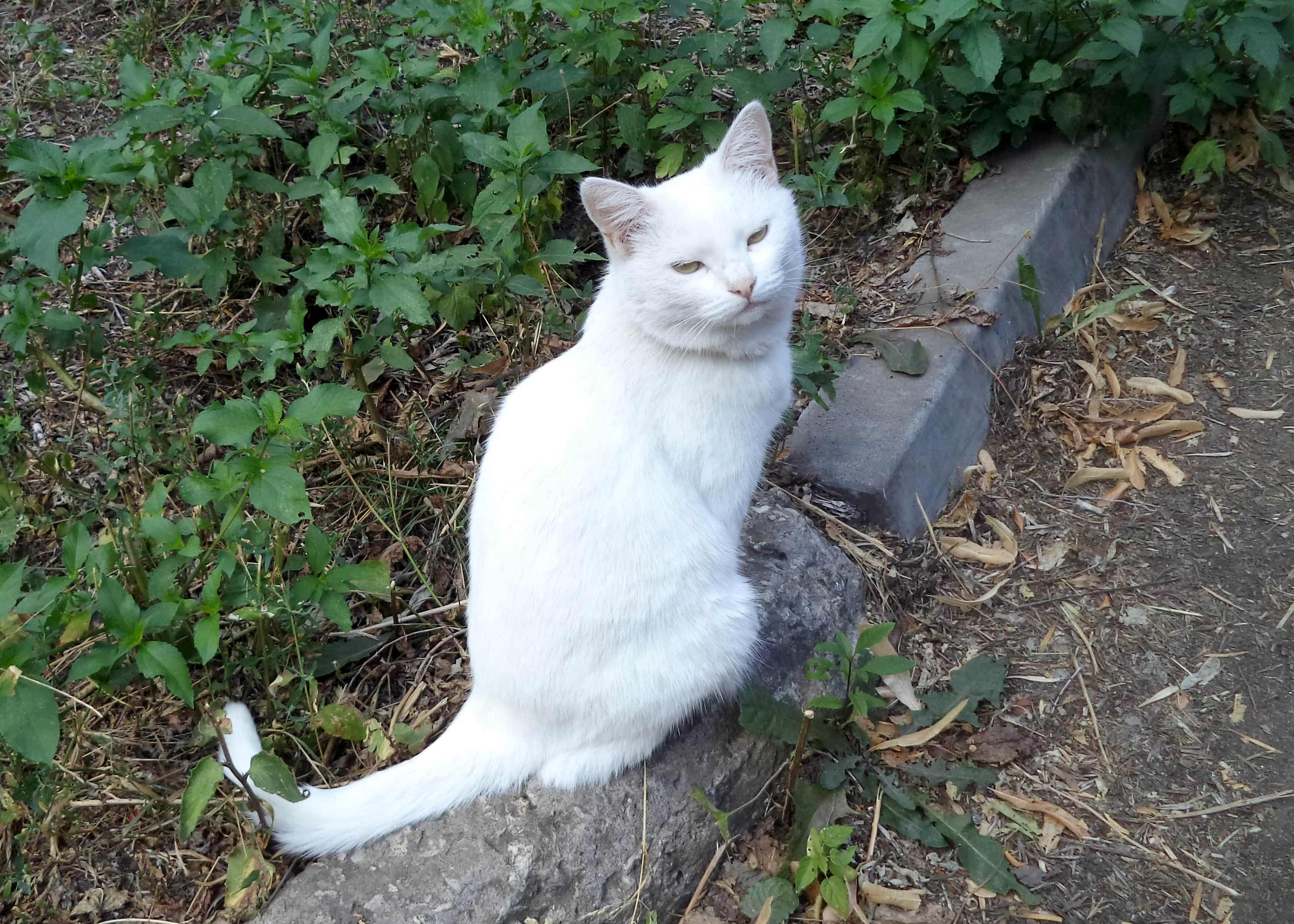 Кошка из Роликового переулка