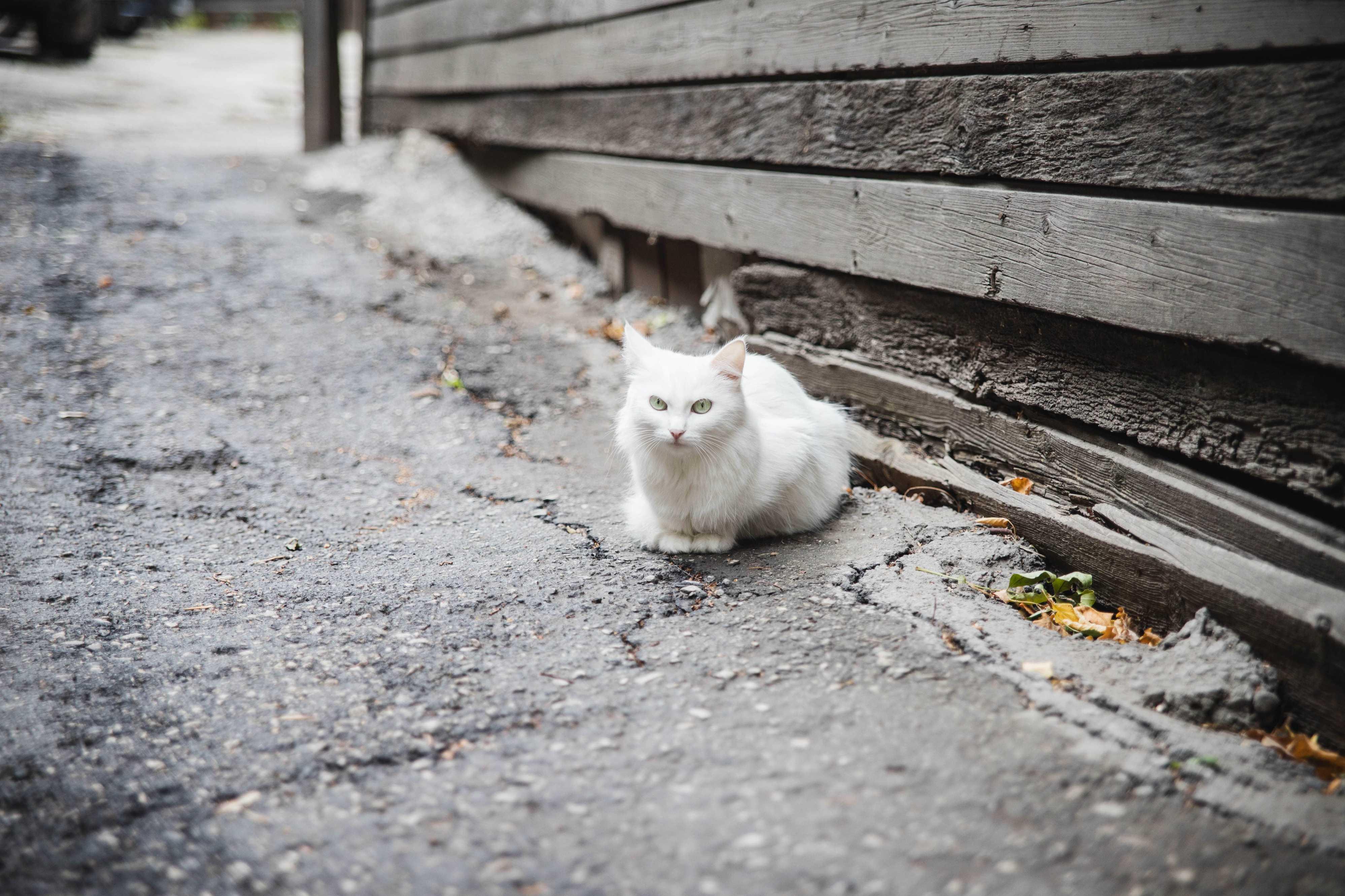 Кошка с улицы Садовой