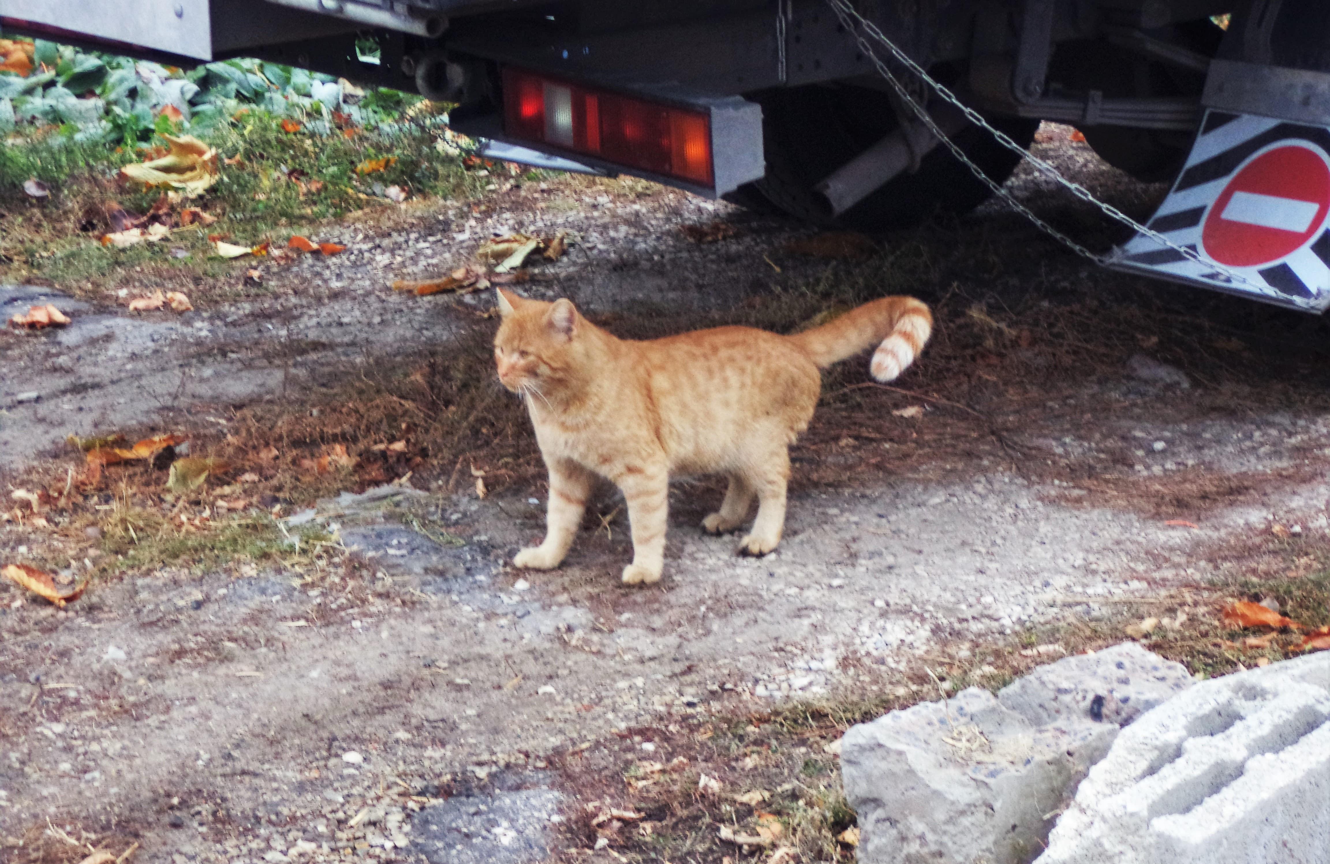 Самара котическая на Среднем проезде в Самаре