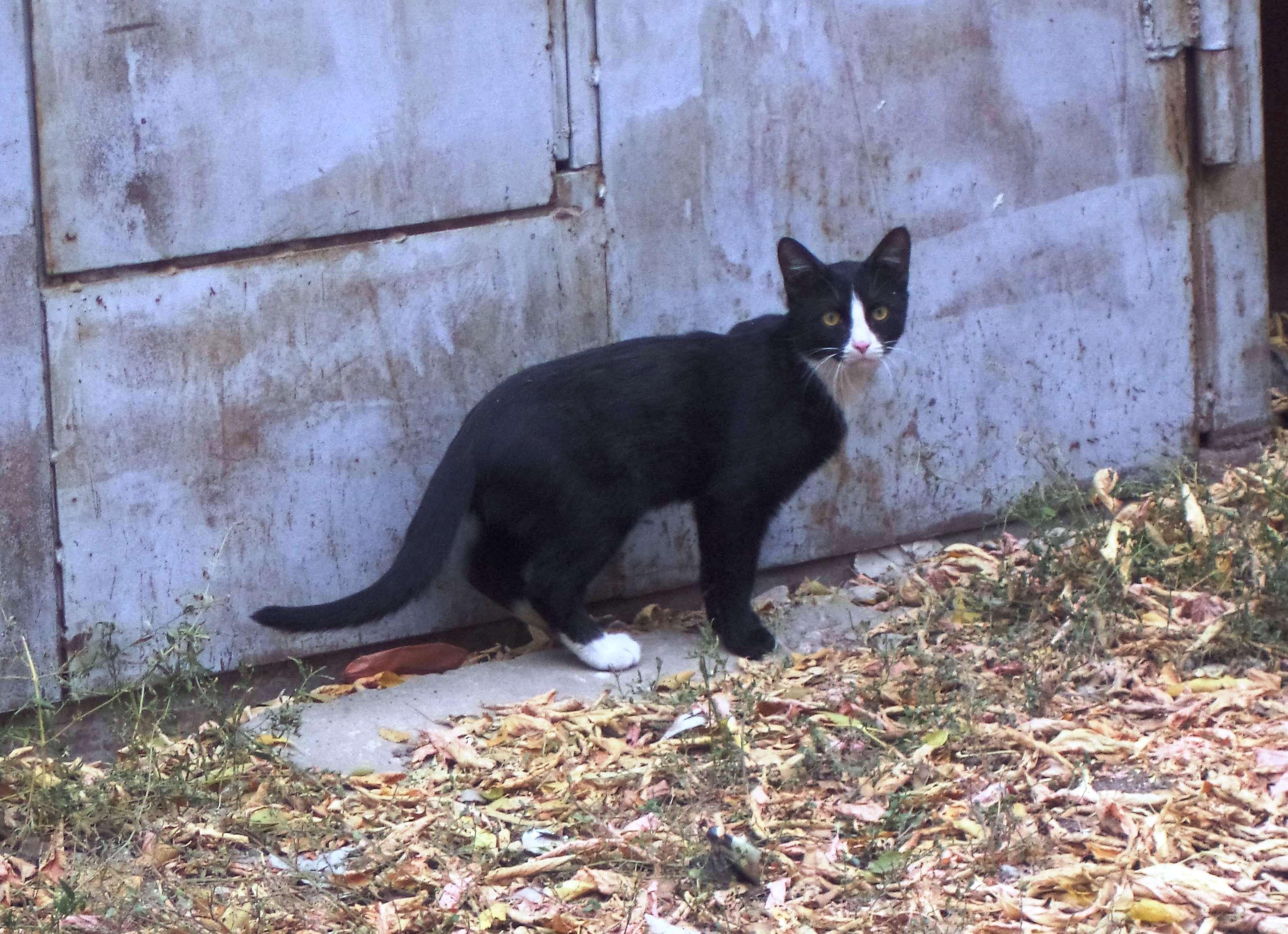 Кот с улицы Средне-Садовой