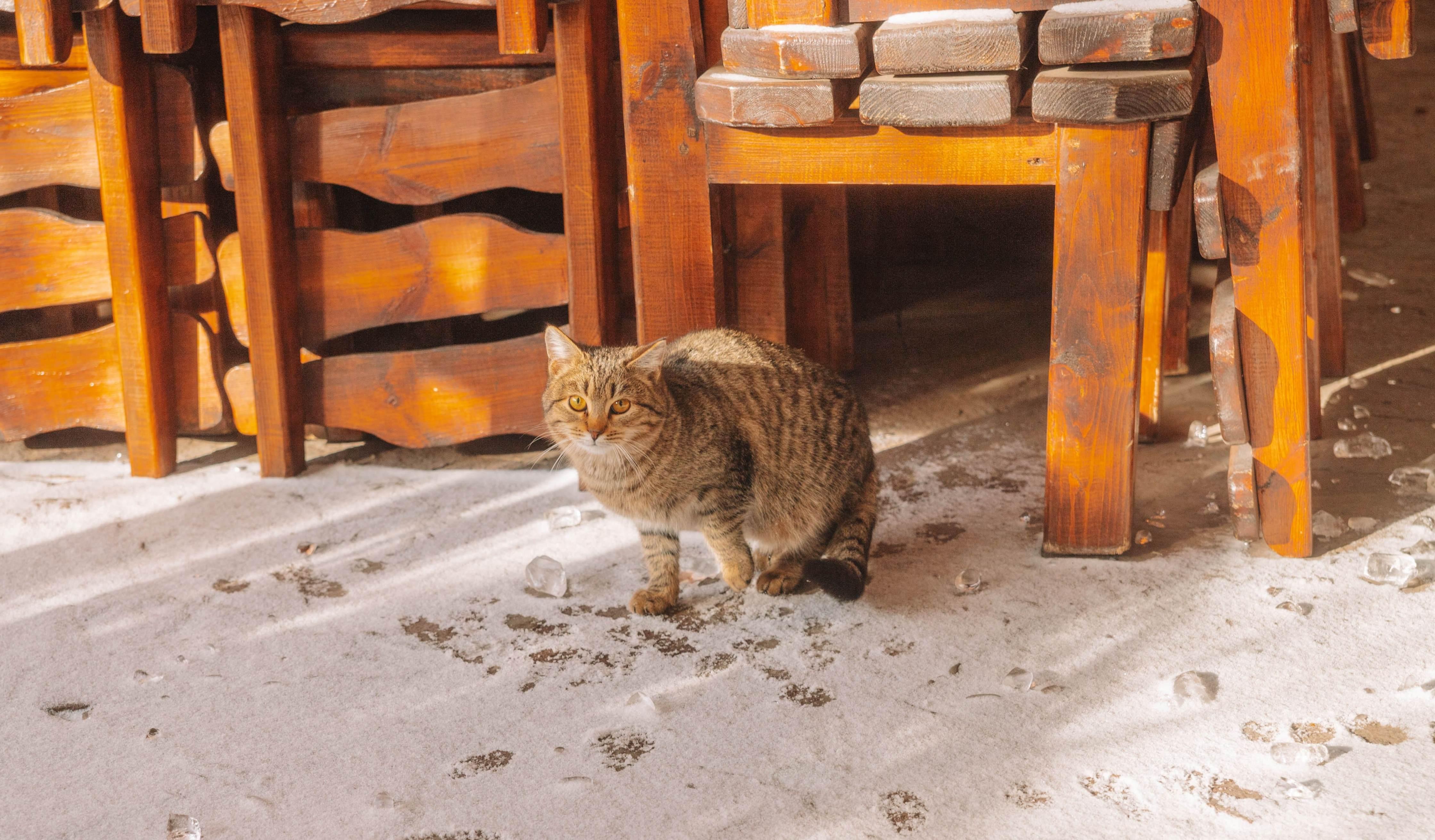 Котик с улицы Стара-Загора