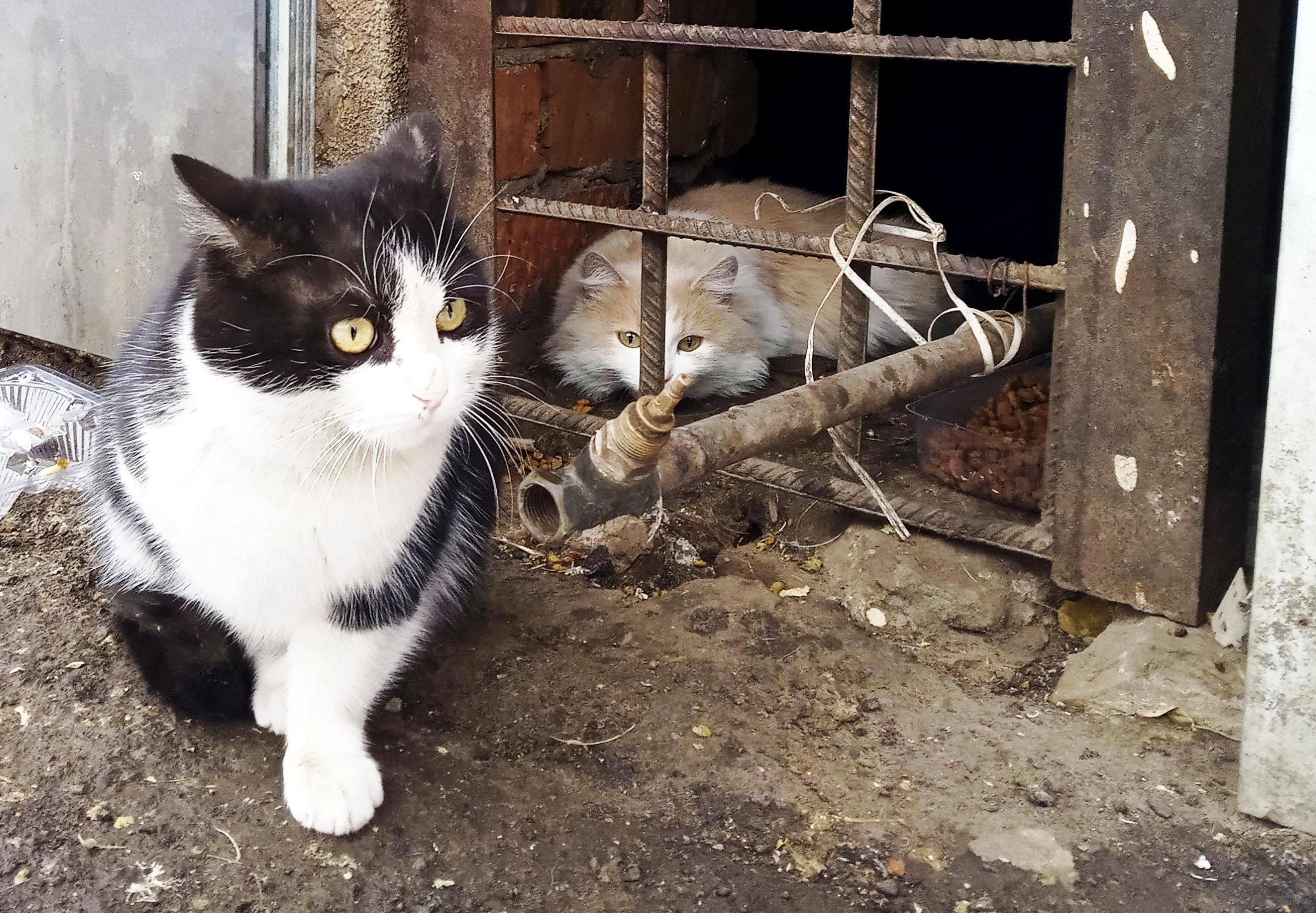 Коты улицы Ставропольской