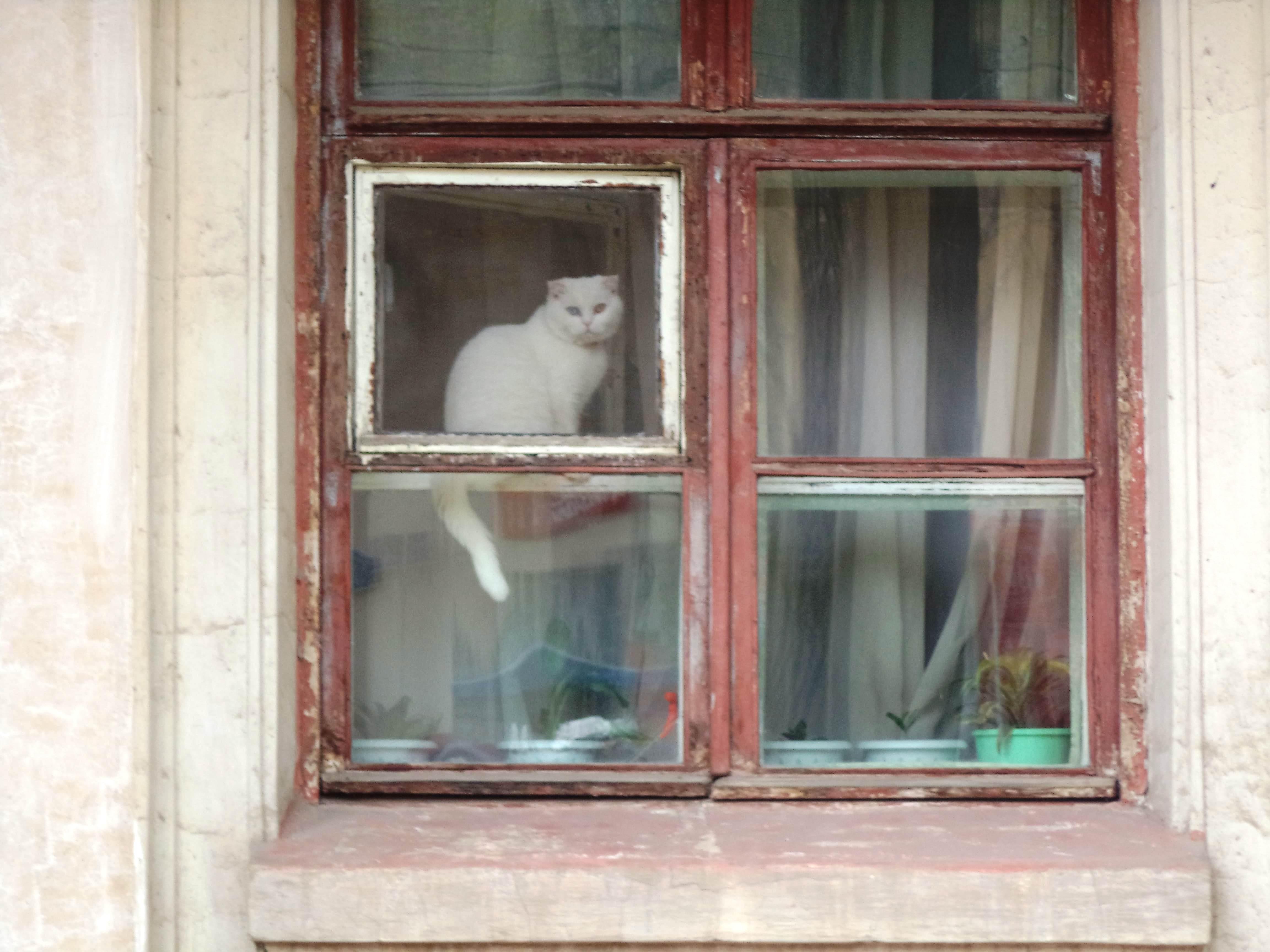 Котик с улицы Фасадной