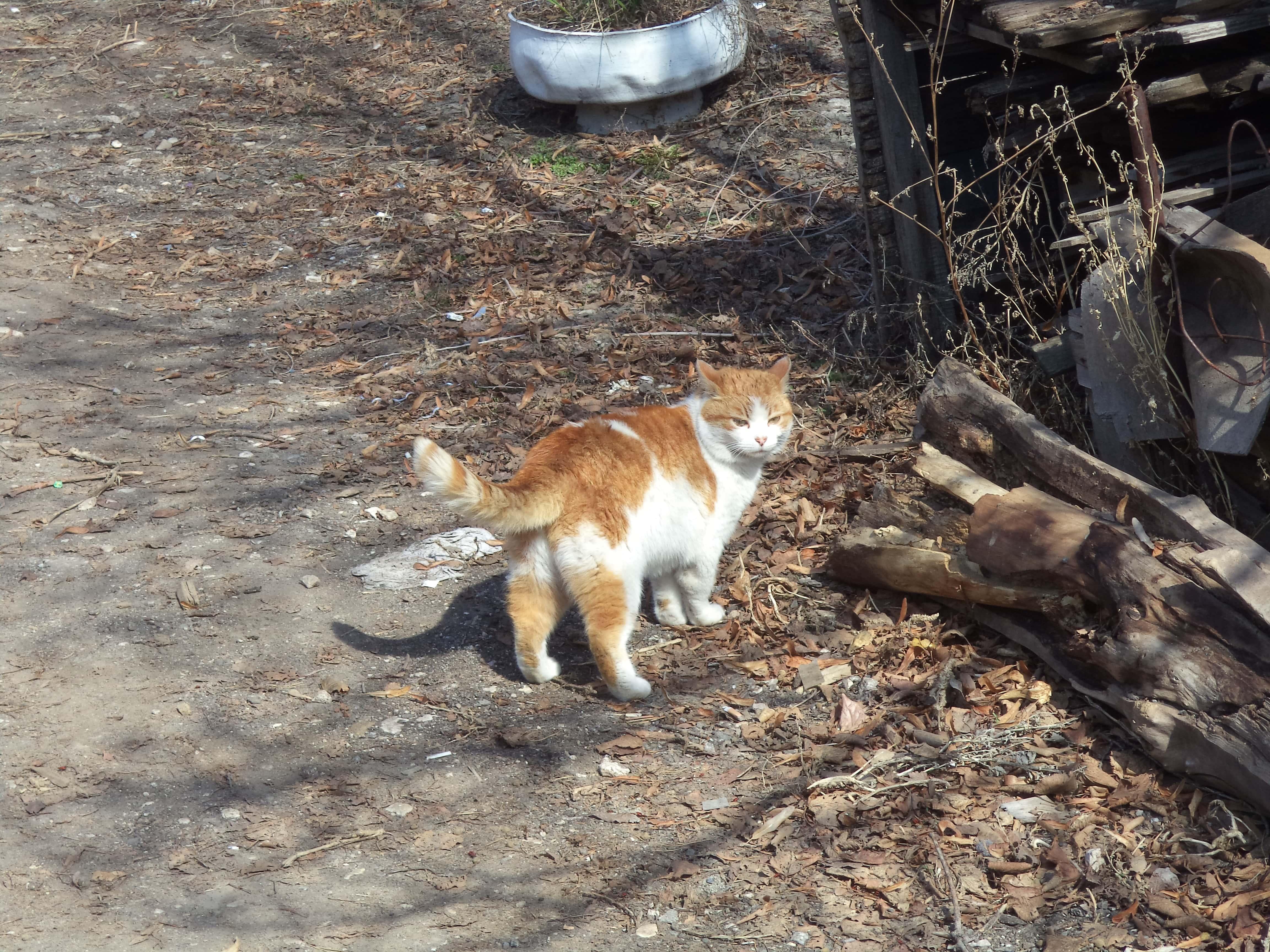Самара котическая на улице Украины