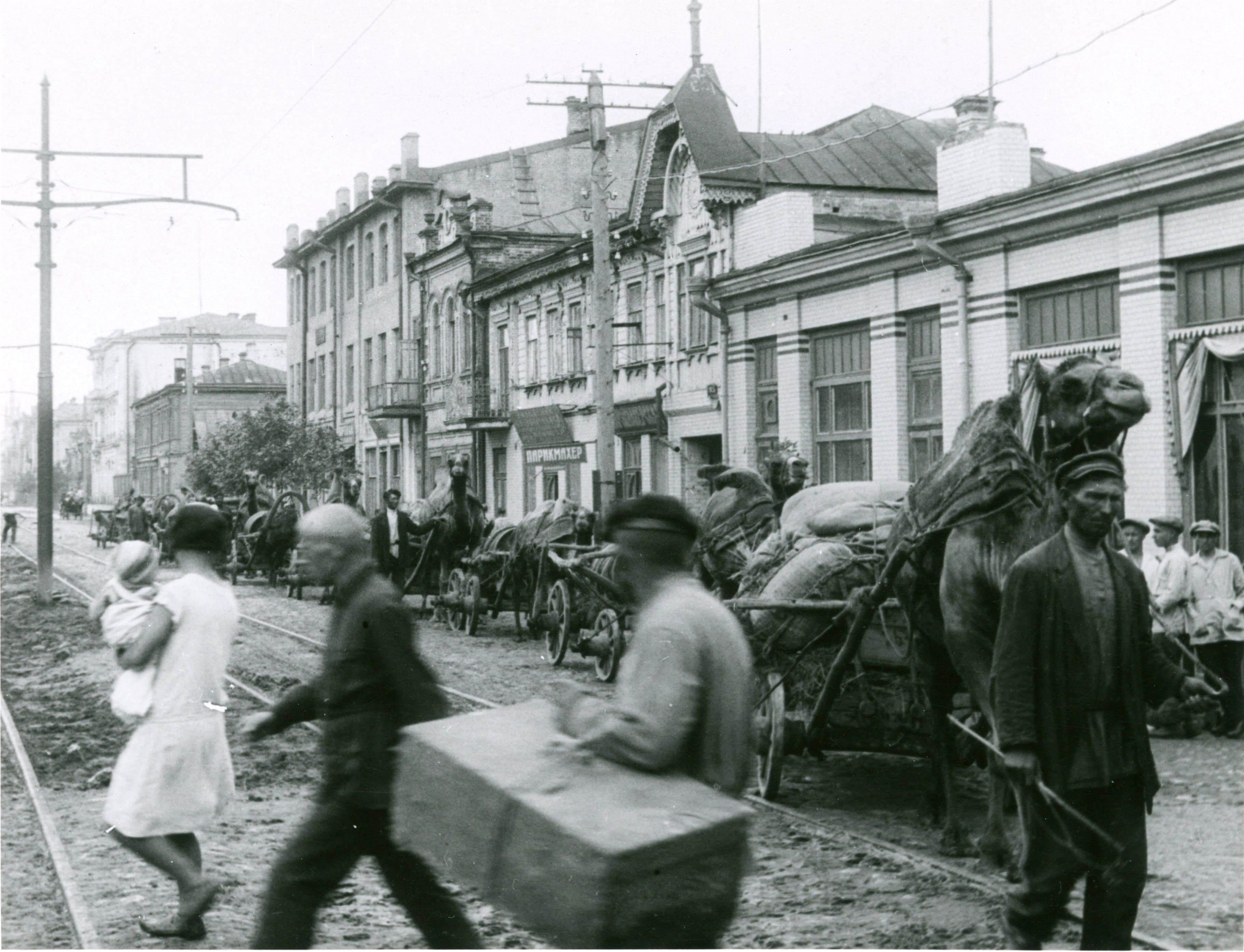 Верблюды на улице Фрунзе